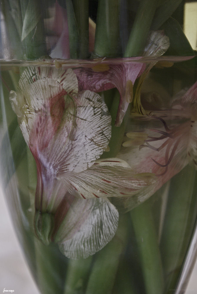 Flowers in vase below the surface