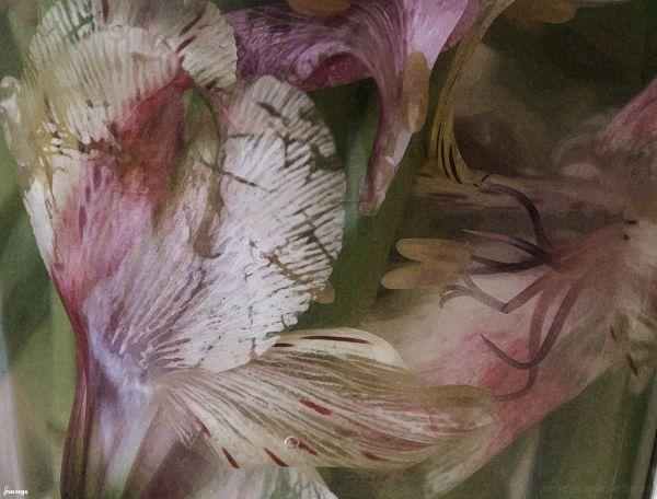 Flowers in vase below the surface