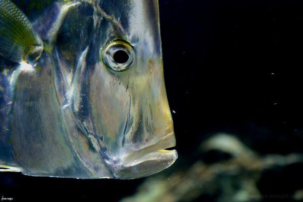 Pompano Fish Georgia Aquarium Atlanta