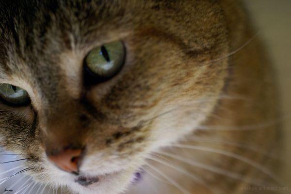 Animal Cat Tabby Winnie