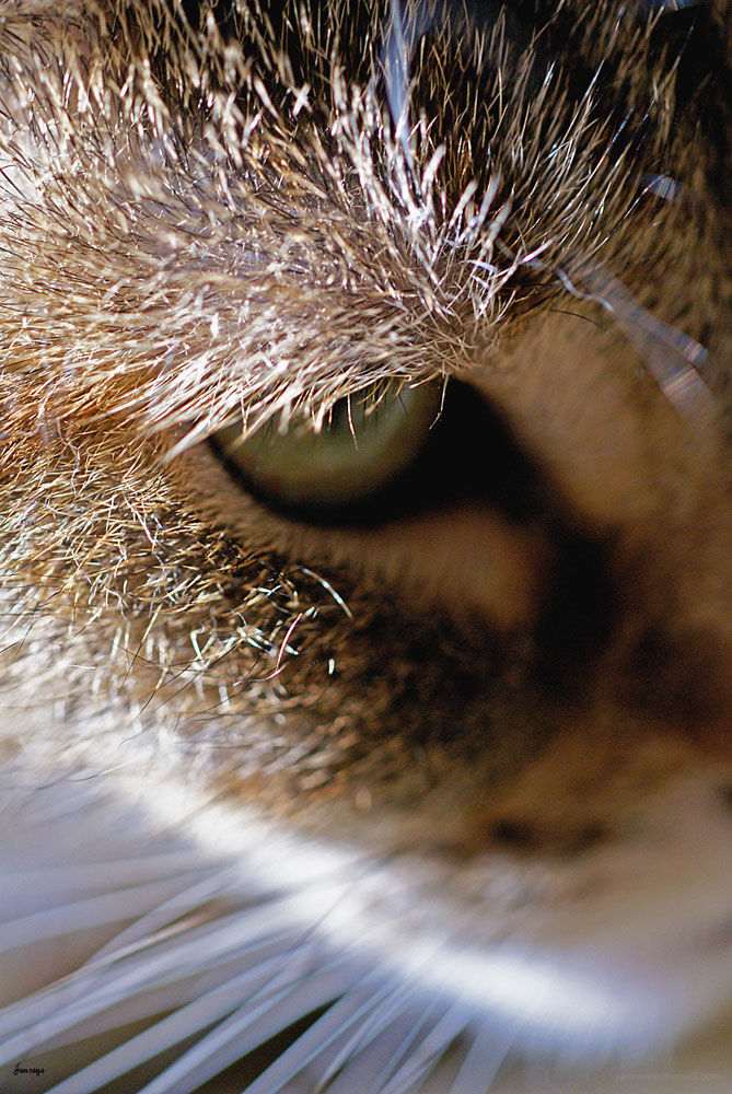 Animal Cat tabby Winnie Jennifer Hatcher