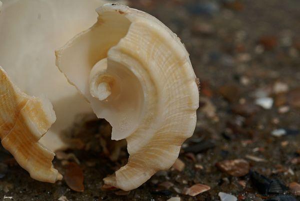 Nature Shell Beach Sand Tybee Island