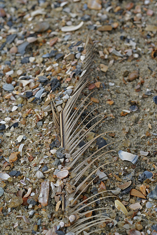 Beach Feather Sand Shells Tybee