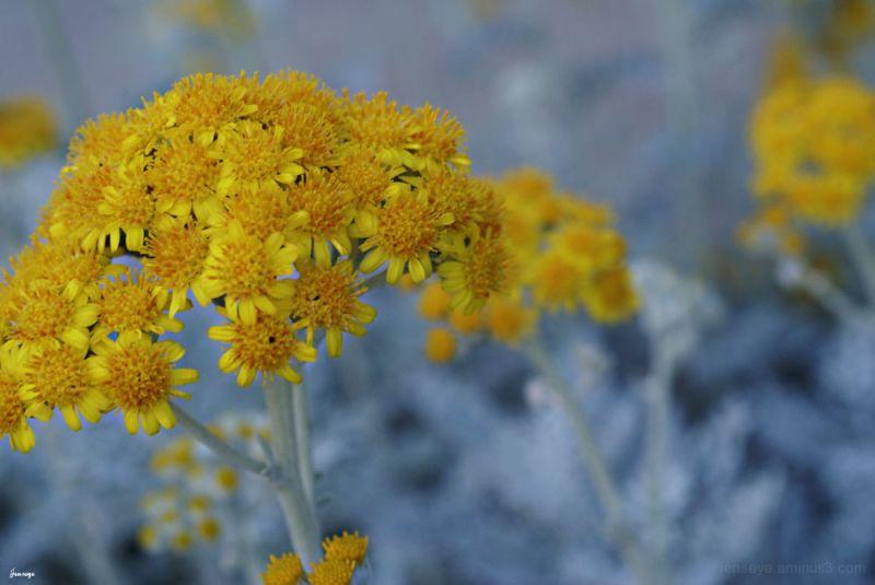 Teeny Tiny Yellow Flowers Tybee