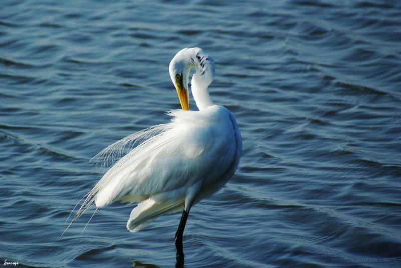 Animal Bird Egret Beach White Saint Simons