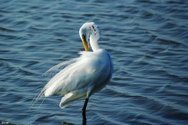 Animal Bird Egret Beach White Saint Simons