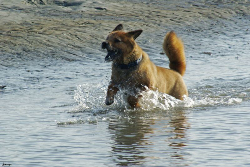 Animal Dog Beach Sand Water