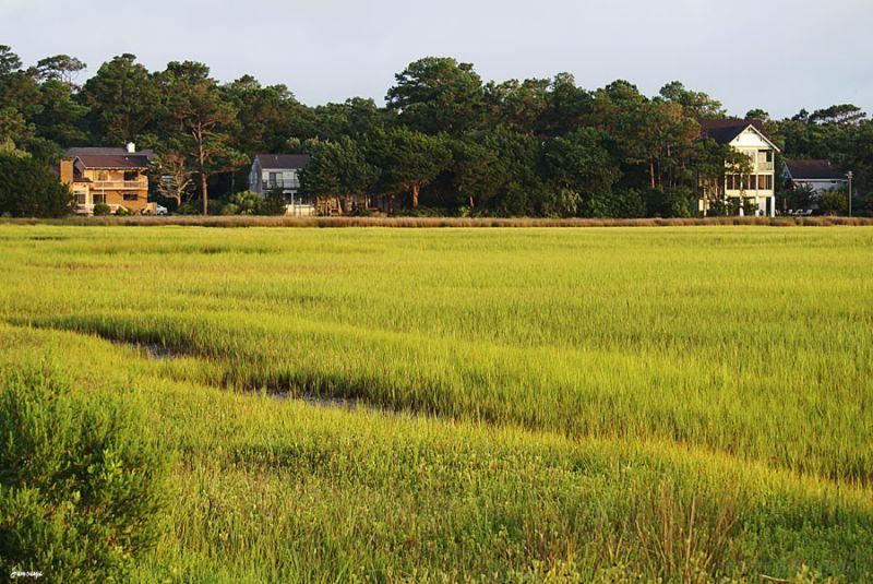 Lanscape Marsh Saint Simons Water Green