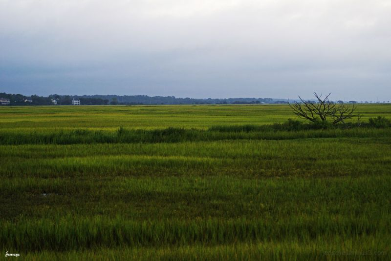 Landscape Marsh Green Grass St. Simons