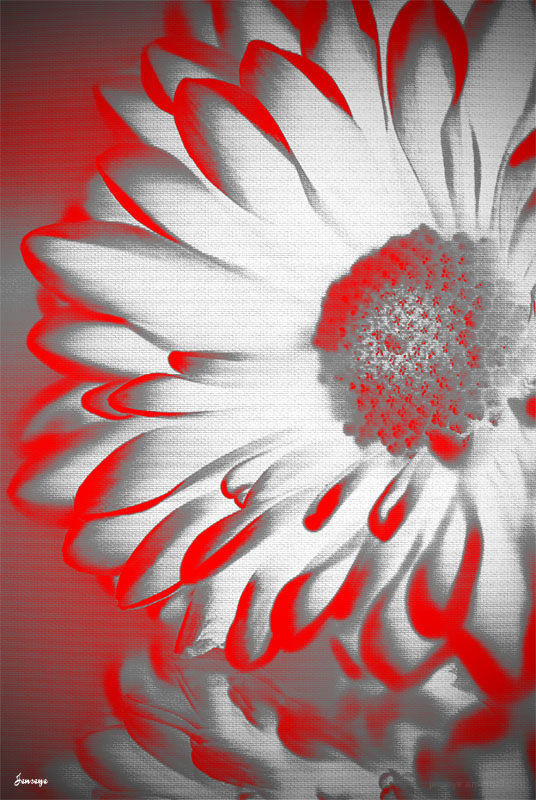 Graphic Design Flower Red White Texture