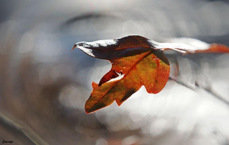 Nature Leaf Woods Winter Spot Focus Filter