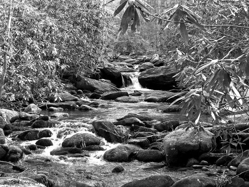 Landscape Jakes Creek Great Smoky Mountains