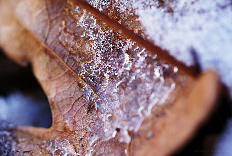 Nature Leaf Ice Snow Winter