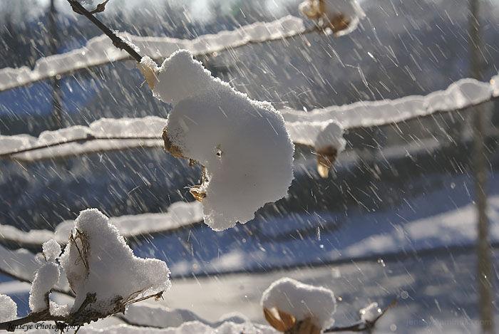 Nature Southern Snow Tree Alpharetta