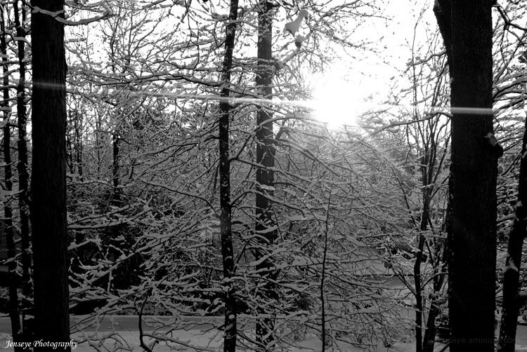 Nature Woods Tree Southern Snow