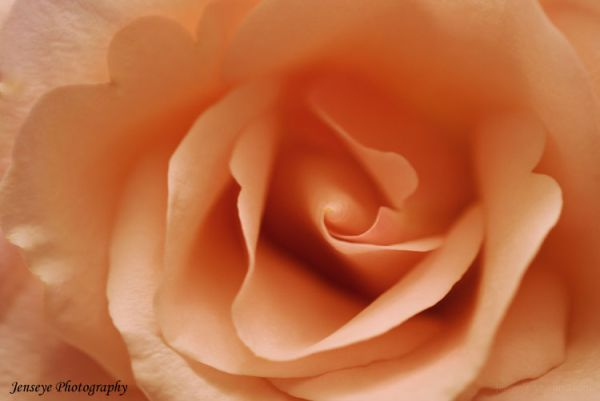 Art Design Filters Layers Pink Rose Flower