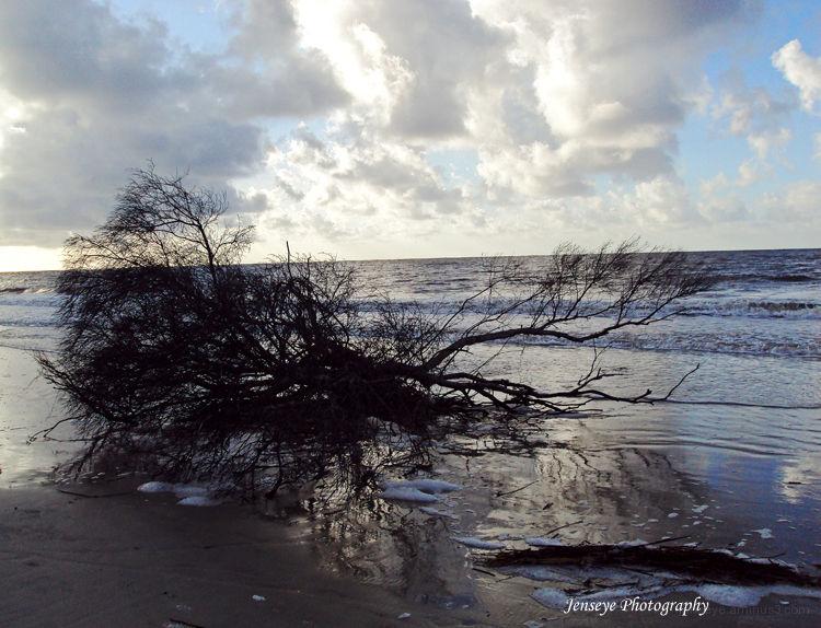 Landscape Beach Tree Shore Water