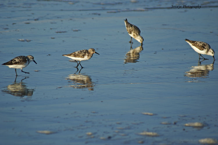 Animal Shore Birds Beach Water St Simons