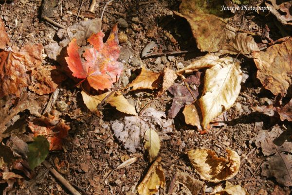 Leaves Nature Autumn Trail Gold Red Brown