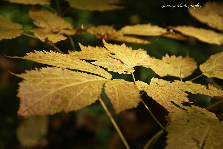 Nature Leaves Gold Autumn Fall Float