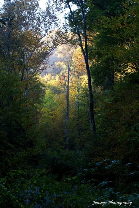 Landscape Woods Smokies Autumn Fall Light