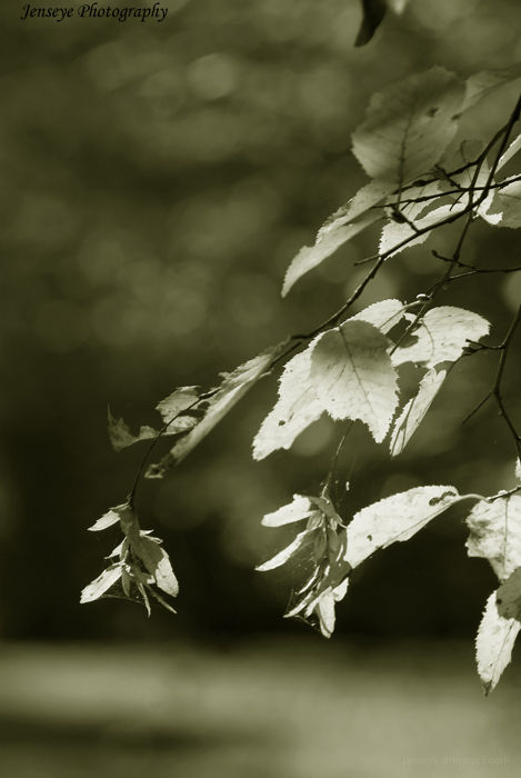 Plant Leaves Sepia