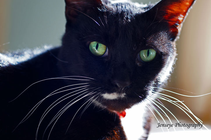 Animal Tuxedo Cat Green Eyes Milkie