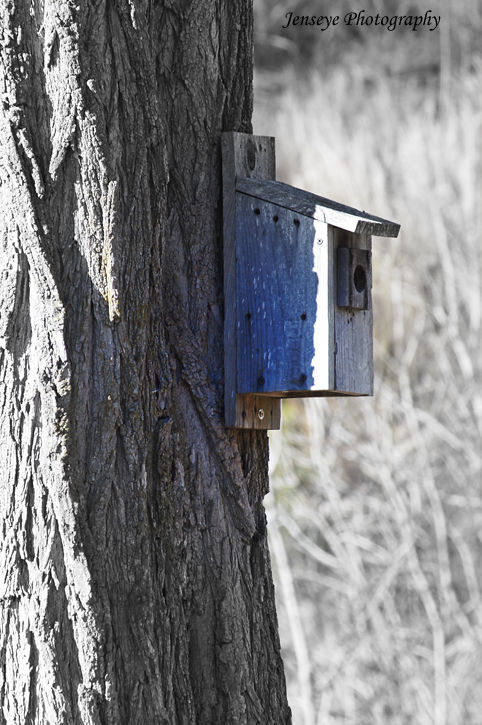 Nature Bird House Wood Tree Winter Retreat