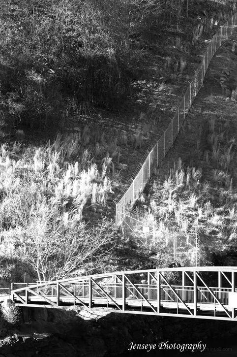 Black and White Landscape Bridge and Fence