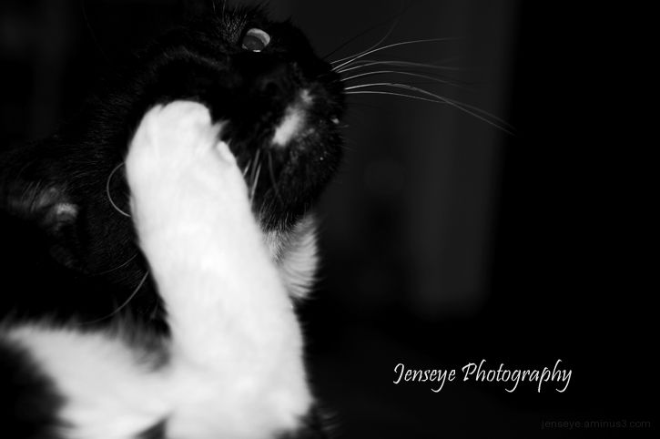 Animal Cat Foot Paw Black White Scratch