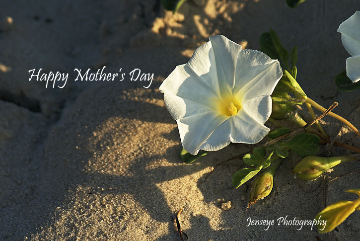 Plant Flower Morning Glory Happy Mother