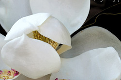 Plant Flower Tree Magnolia Petals White