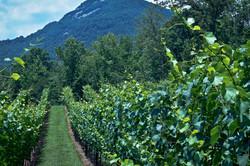 Yonah Mountain Vineyards Yonah Mountain Georgia