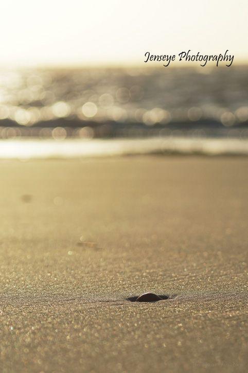 Ocean Nature Beach Stillness Sand Shell