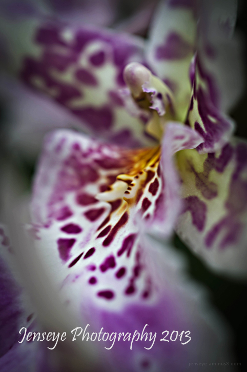 nature flower purple white orchid botanical garden