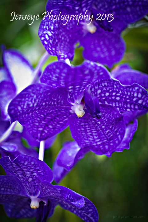 Plant Flower Orchid Purple Botanical