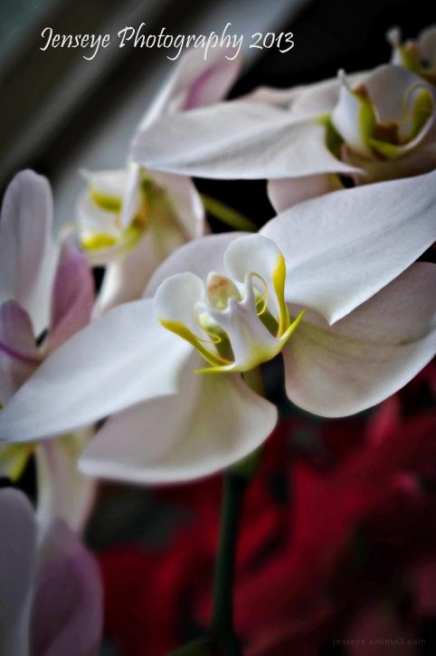 Nature Flower White Orchid Botanical