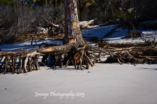 Island Remote Beach Palm Tree Landscape