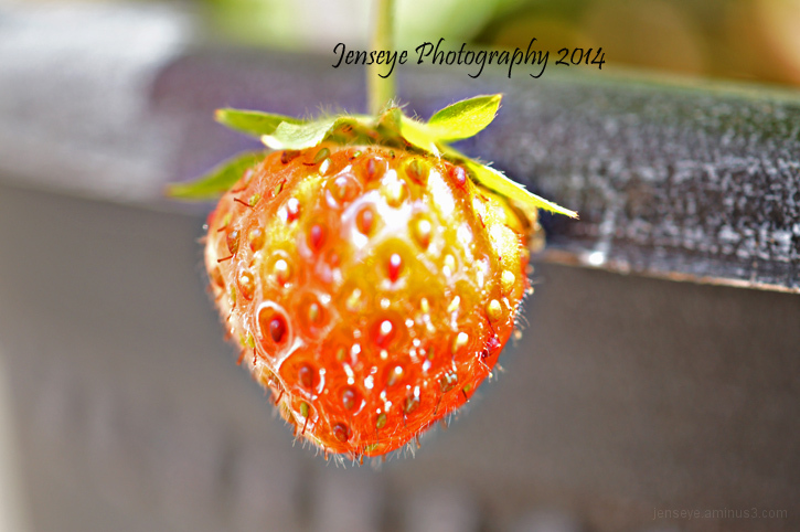 Strawberry Red Seeds Fruit Green Plant