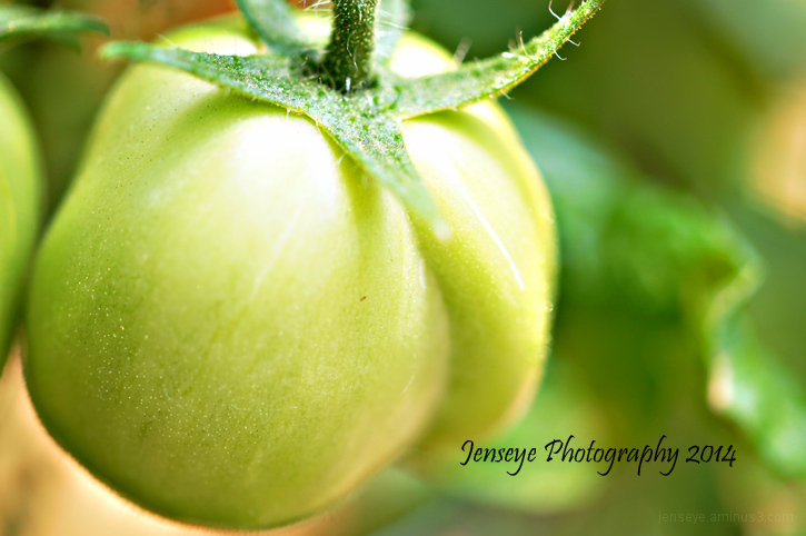 Plum Tomato Green Fruit Vegetable Plant