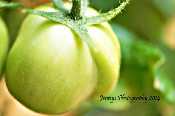 Plum Tomato Green Fruit Vegetable Plant