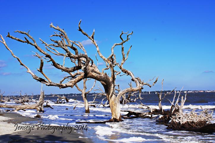 Driftwood Beach Jekyll Island Georgia Landscape