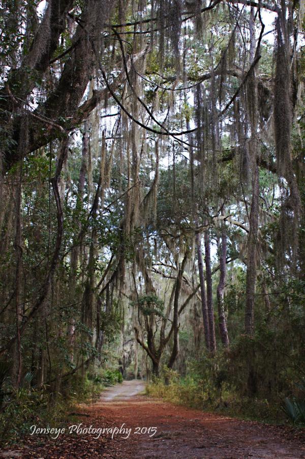 Landscape Canon Point Preserve St Simons Island GA