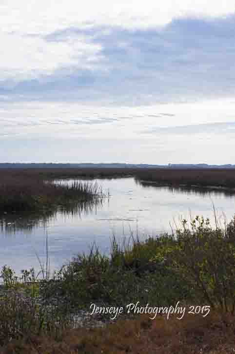 Marsh Canon Point Preserve Georgia Coastal