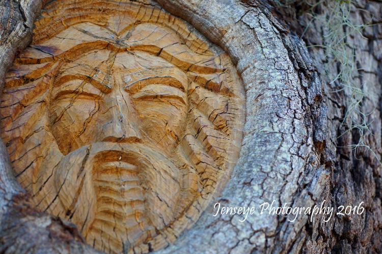 Fu Manchu Tree Spirit St Simons Island Georgia