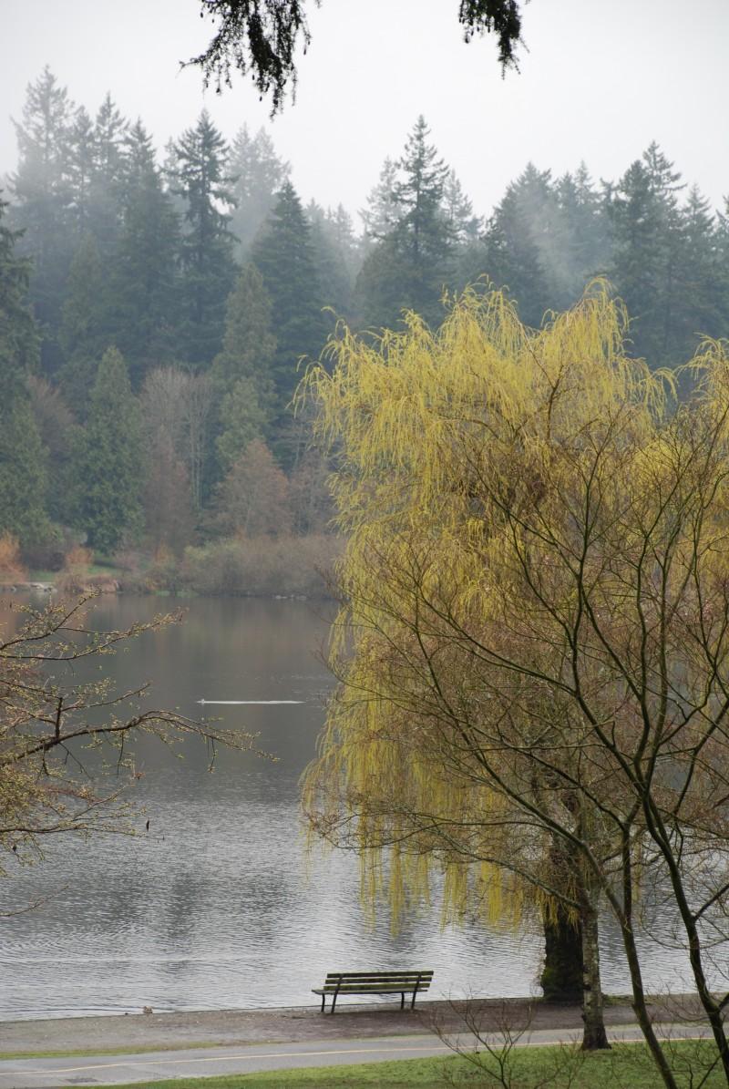 Lost Lagoon mist