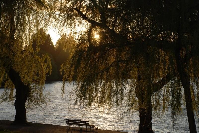 willows at Lost Lagoon