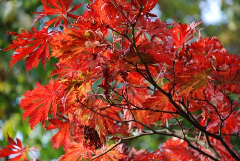 fall colours #3