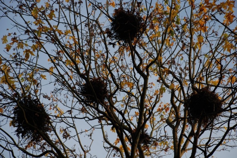 heron nests...empty again