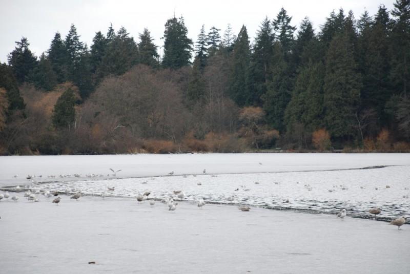 ice at lost lagoon